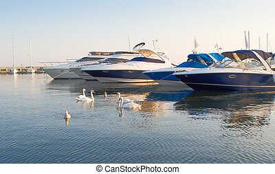 Swans and yachts in a silent bay