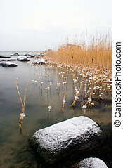 Frozen reeds and stones landscape covered with snow