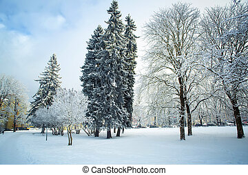 Trees in snow in the winter park. - Trees in snow in the...