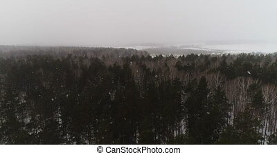 Snowfall in the winter forest - Winter forest view from...