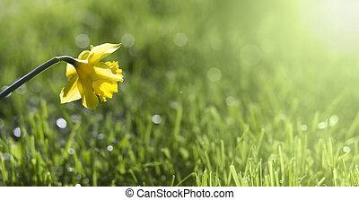 Easter flower banner - Website banner of Easter daffodil...