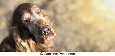 bonito, antigas, cão
