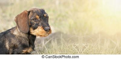Happy puppy banner - Website banner of a happy dog puppy