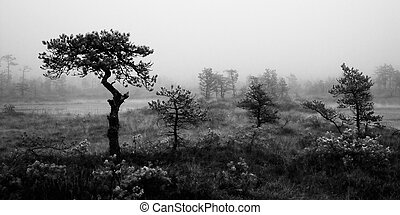 Foggy morning black and white landscape early morning in...