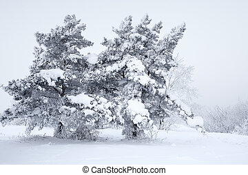 Frozen trees with snow and hoarfrost