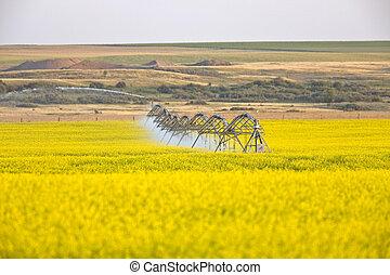 irrigação, irrigadores, trabalho