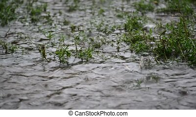 Puddles in grass in rain closeup - Puddles in the grass in...