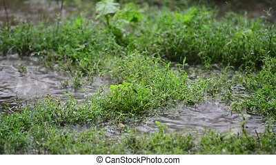 Puddles in grass in rain closeup