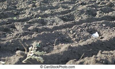 land on farmland prepared for planting garlic in soil
