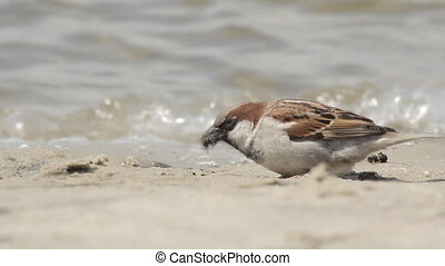 sparrow bird eats insects
