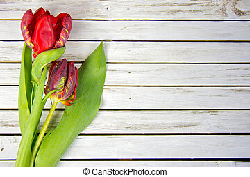 red tulips on whitewashed wood - pair of red fancy tulips on...