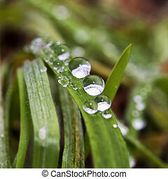 Drops of water on grass blades