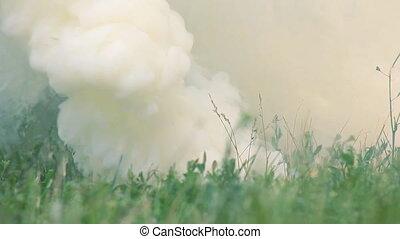 Smokescreen on the Grass