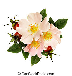 Wild rose flowers and berries arrangement isolated on white