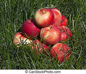 piramide, maçãs, maduro