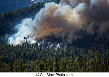 Forest fire in the Rocky Mountains - Large forest fire with...