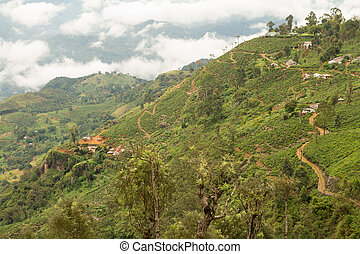 hill countryside with tea plantations