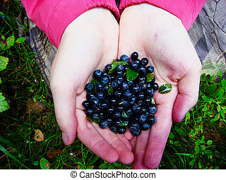Close-up of handful of fresh blueberries in the soiled hands...