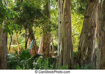 rainforest tree trunks