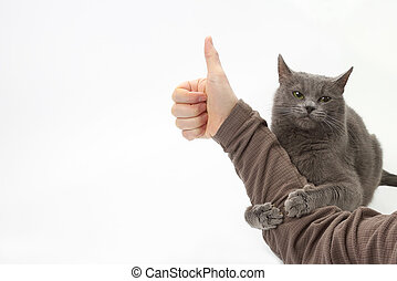 gray cat hugged the hand of the man