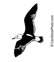 vetorial, silueta, voando, mar, Gaivotas, branca, fundo