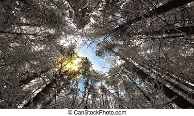 Look up at the magic treetops swaying in the winter wind....