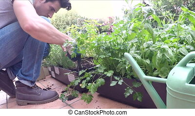 Young man gardening in his home garden - Young stylish...