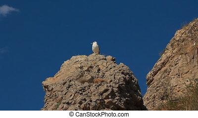 Bird Seagull on Rock - Bird seagull sitting on a rock...