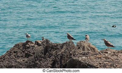 Bird Seagull on Rock - Bird seagull sitting on a rock on a...