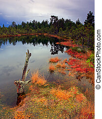 Mystic swamp pond full of colors