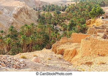 Mountain oasis Chebika