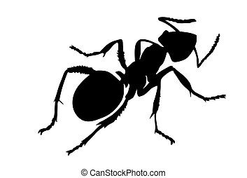 vector silhouette ant on white background