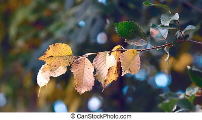 Autumn Landscape Plants - Autumn landscape. Red yellow...