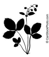 silhouette of the bush of the strawberry on white background