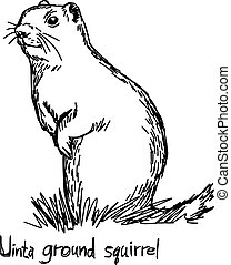 Uinta ground squirrel - vector illustration sketch hand drawn with black lines, isolated on white background