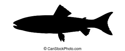 vector silhouette to trouts on white background