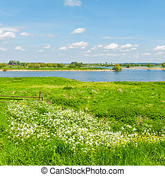 Pasture on the Banks of the Rhine in Holland