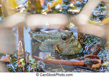Amphibious fish in mangrove forest . - Image of Amphibious...