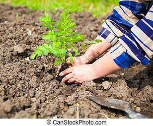 Woman planting young plant into the soil. Spring and ecology concept