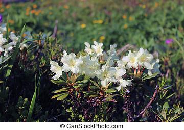 taiga - flowers in taiga