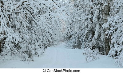 Walkway in the snowy forest