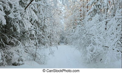 A lot of snow in the winter forest