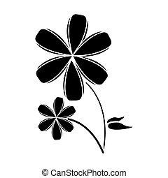 plumeria flower decoration pictogram
