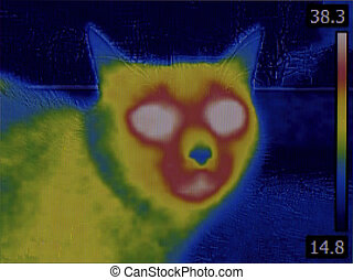 Cat Head Thermal Imaging - Fever Thermal Image of Cat Head