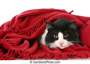 cat hiding under blanket - black and white cat laying under...