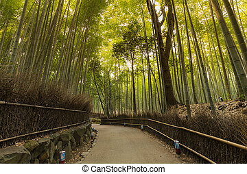 Walking pass to Bamboo Forest Arashiyama, Kyoto
