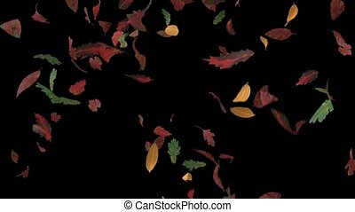 Leaves fall autumn falling seasons thanksgiving trees leaf