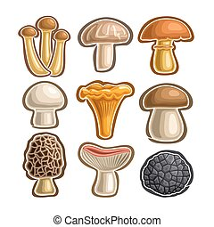 Vector set Icons edible Mushrooms: abstract isolated logo...