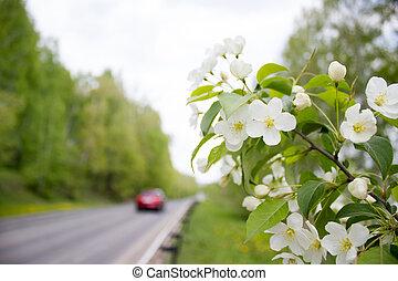 Asphalt road in spring forest