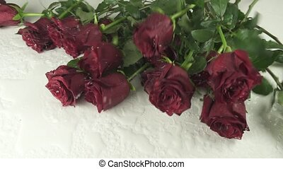 Bouquet of red roses falling on white background with water slow motion